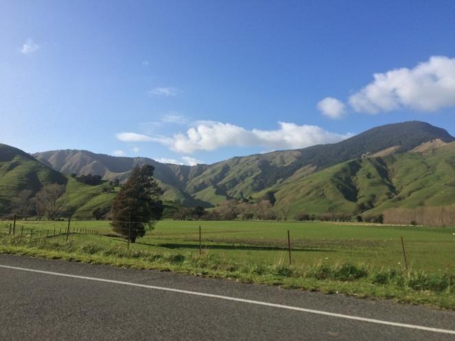 rolling hills.jpg